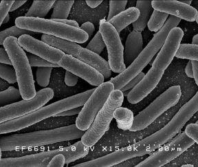 bacteria-microscope