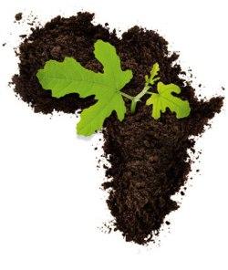 csr-leaf-africa